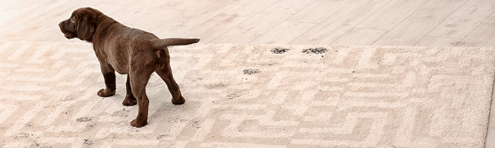 Dial Carpet Cleaning - Pet Dirt Removal