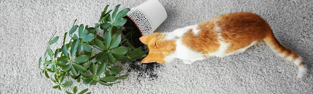 Dial Carpet Cleaning - Pet Smell Removal