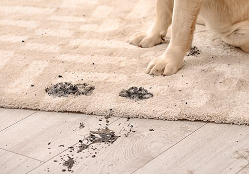 Dial Carpet Cleaning - Pet Stain Removal