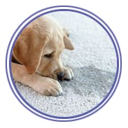 Dial Carpet Cleaning - Pet Stain Removal Icon